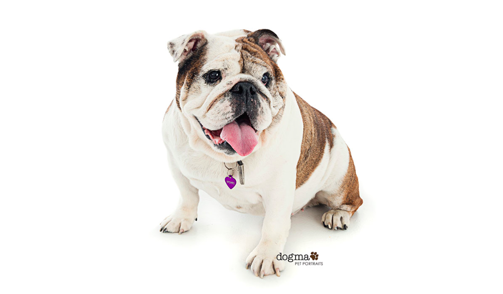 photo credit: dogma pet portraits