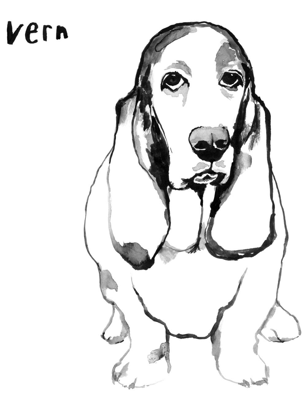 Pup_vern