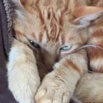 Bob A. Cat
